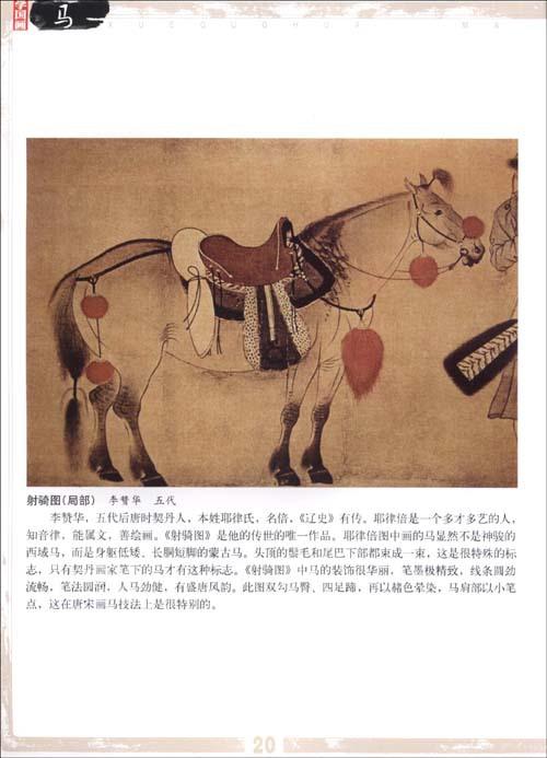 马的外形结构图