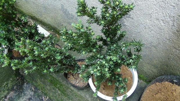 一颗植物结构图根茎叶