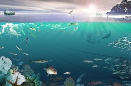 的大型植物的海洋动物和滤