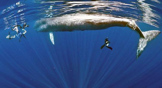 漫画蓝鲸铅笔画