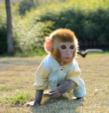 向微信好友买宠物猴结果被**了3000元